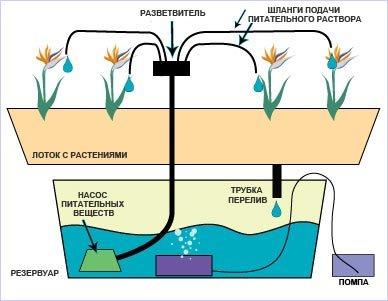 Выращивание растений без почвы.