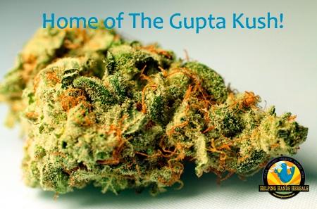 Gupta Kush - вид марихуаны