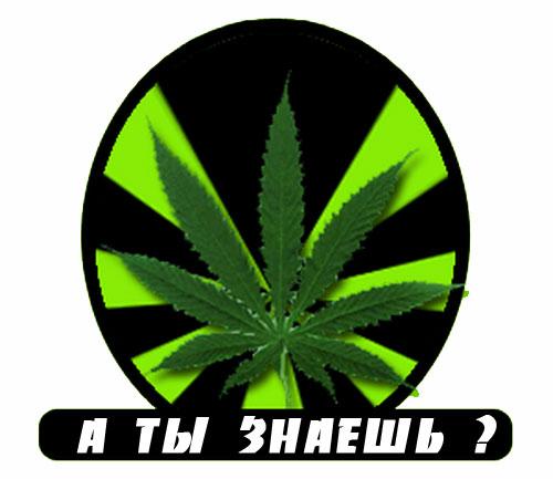 Факты о марихуане
