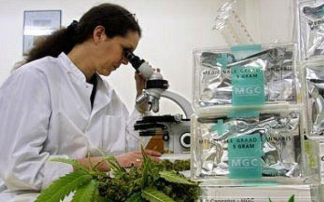 Изучение свойств марихуаны