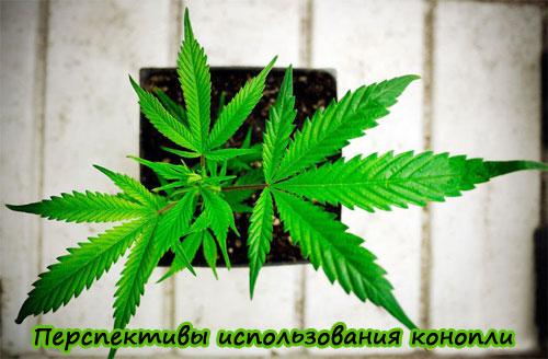 Использование марихуаны в медицине