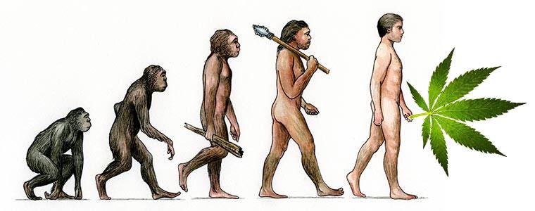 Влияние каннабиса на эволюцию