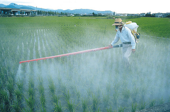 Пестициды опрыскивание