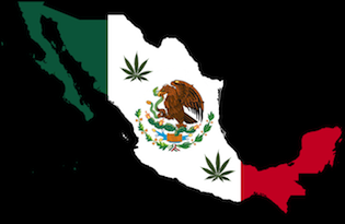Декрименализация марихуаны в Мексике