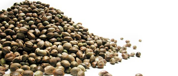 Интересные семена конопли
