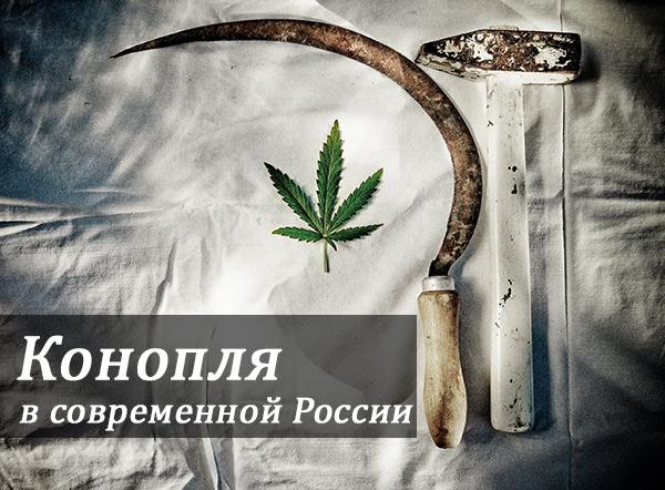Конопля в современной России