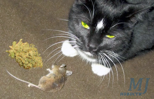 Кот принёс марихуану