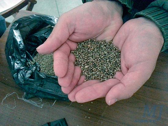 200 тысяч семян конопли