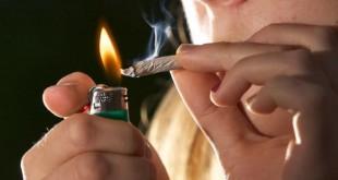 marijuana iq