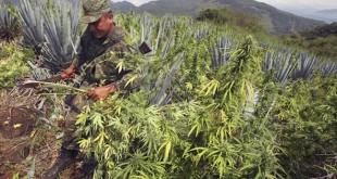 Легализация в действии