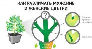Растения женские и мужские