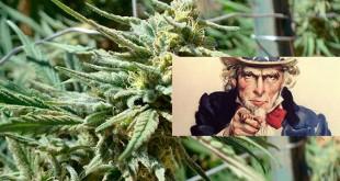 Бесплатная марихуана