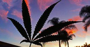 Страны пересмотревшие свой взгляд на марихуану