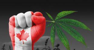 Индустрия каннабиса в Канаде