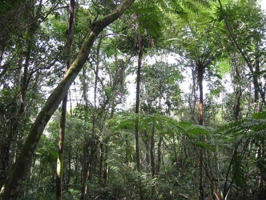 Тропики Бразилии