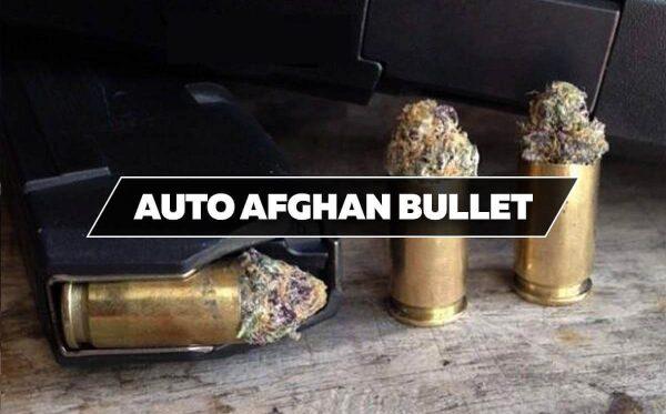 Afghan bullet