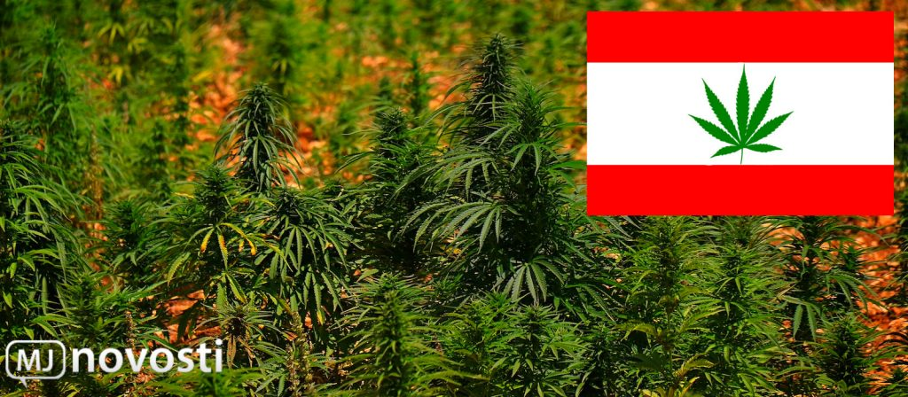 Поле марихуаны в Ливане
