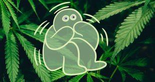 тремор от марихуаны