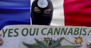 легализация марихуаны во Франции