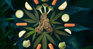 полезные свойства конопли: каннабис супер продукт