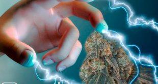 марихуана заряд энергии
