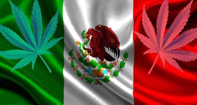 Конопля в Мексике